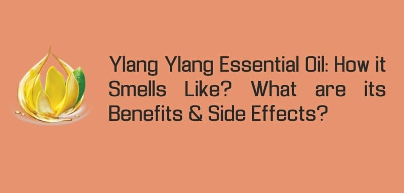 Ylang Ylang Essential Oil: How it Smells Like? Benefits & Side Effects Explained!